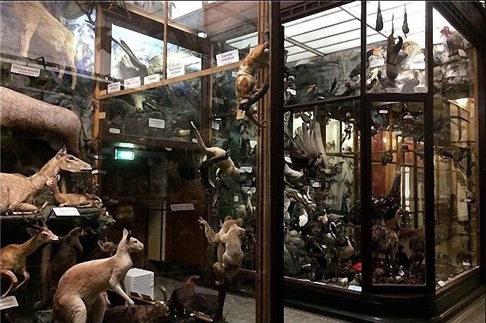 muze resim1